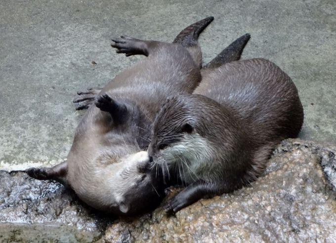 かわいい動物たちと出会える!緑豊かな千葉市動物公園