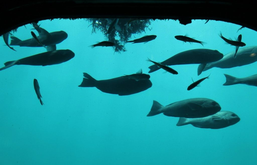 勝浦の海底世界を満喫! 『海中展望塔』
