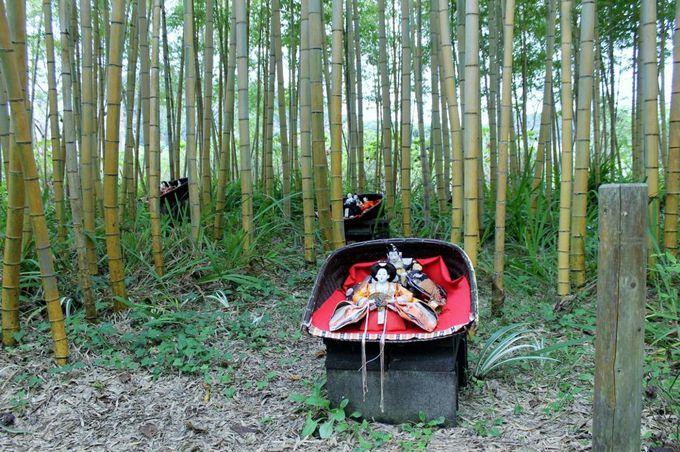 嵯峨野を彷彿とさせる竹林!