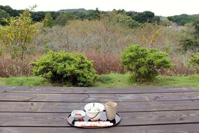 丘の上からの景色が素晴らしい「桜茶屋」でホッと一息!