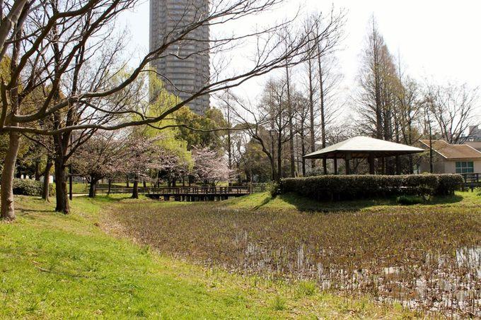 開放的な公園でお花見!『猿江恩賜公園』