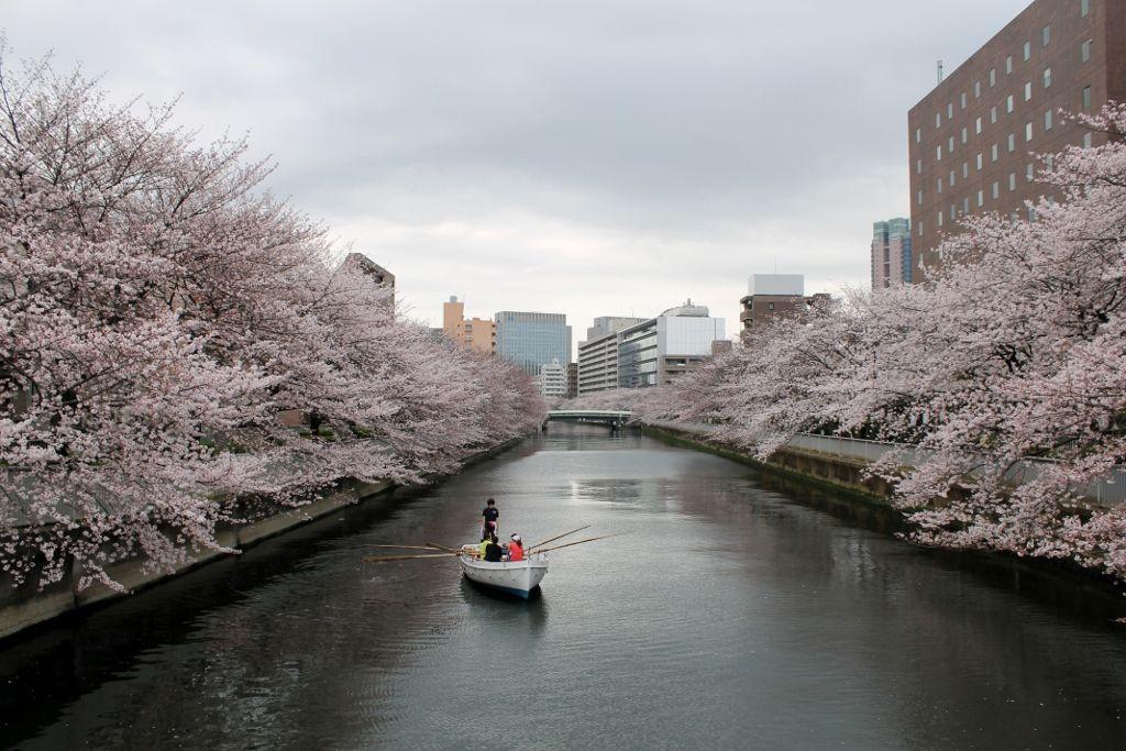水辺の町並みが美しい!江東区おすすめお花見スポット4選