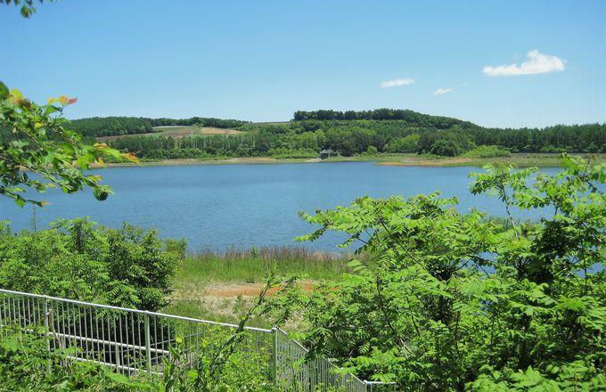 樹々の隙間に輝く「田代湖」周囲のキャベツ畑も堪能!