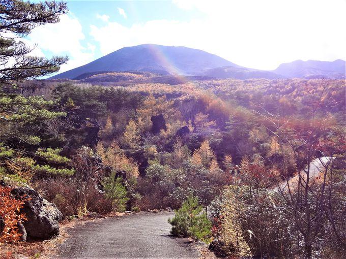 鮮やかな森と無数の溶岩が織りなす「鬼押出し園」の紅葉