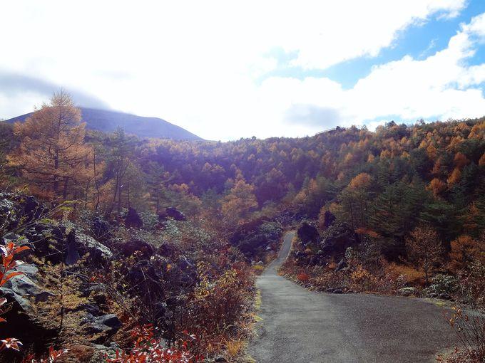 高低差が魅力!「浅間園ヴォルケーノウォーク」の紅葉