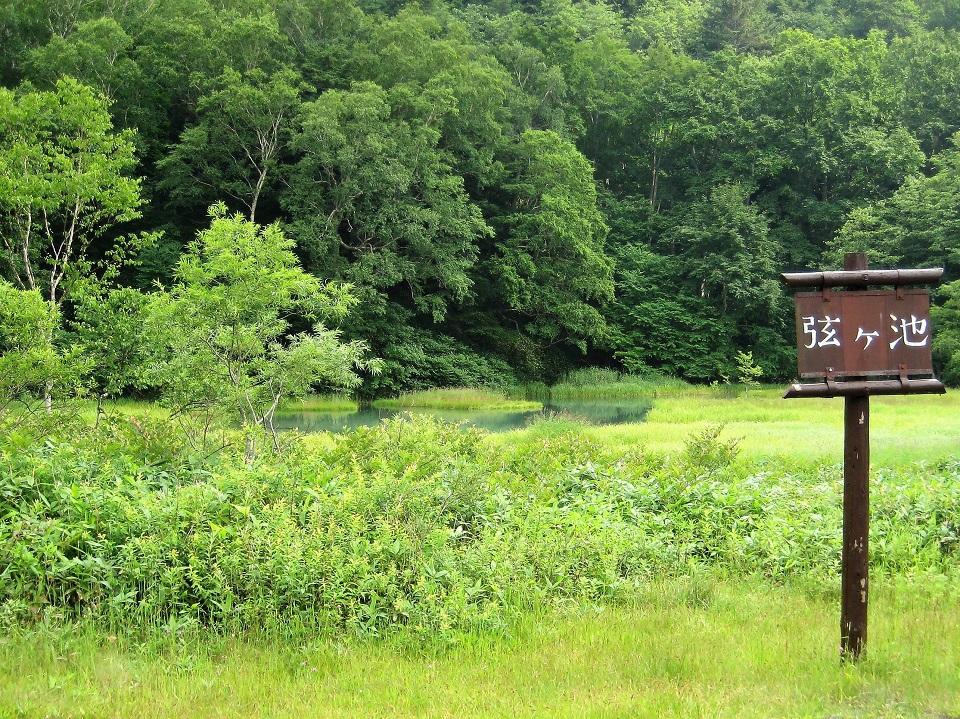 神秘的な「弦ヶ池」や流れる景色に癒されるドライブルート