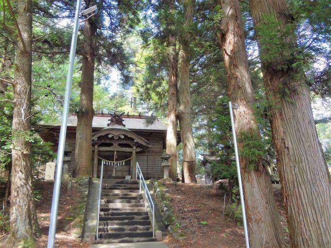 多くの古木が放つ自然のパワーみなぎる境内