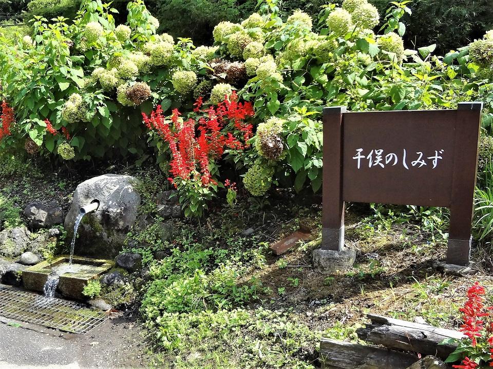 道路沿いに湧き出る群馬県嬬恋村の名水!「干俣のしみず」