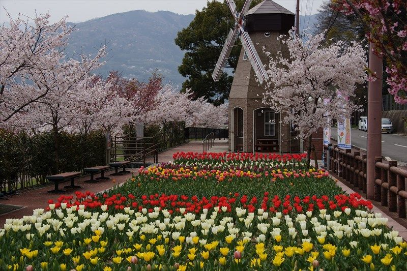 チューリップがいっぱいのオランダ風デ・レイケ公園