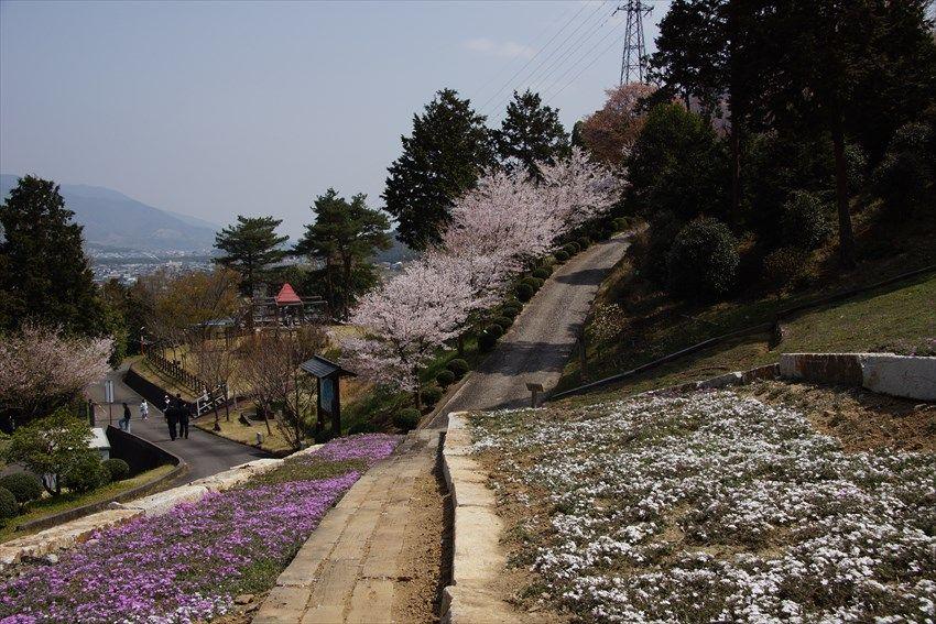 加茂農村公園で眺望と花を楽しむ