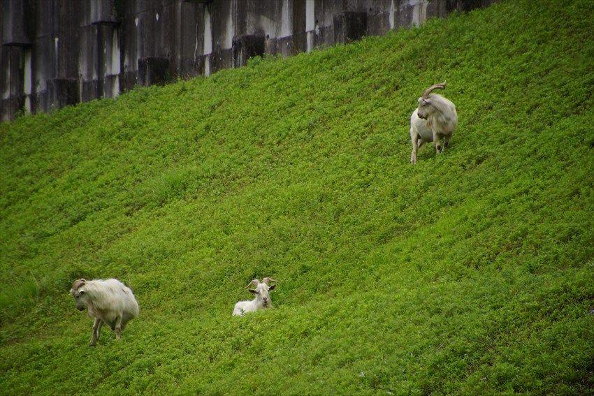 羊のいる川沿いの宿泊施設で泊まるのも楽しい