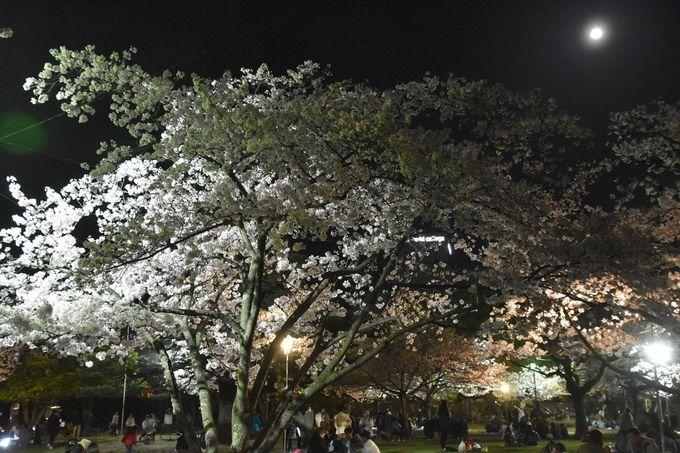 お花見宴会の徳島城博物館前