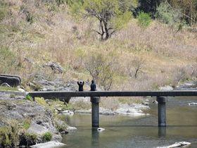徳島県の清流「穴吹川」の初夏。懐かしい日本の風景や可憐な花