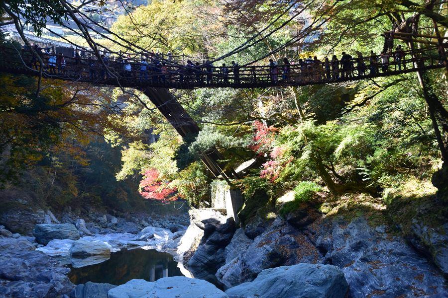 観光名所、かずら橋の紅葉