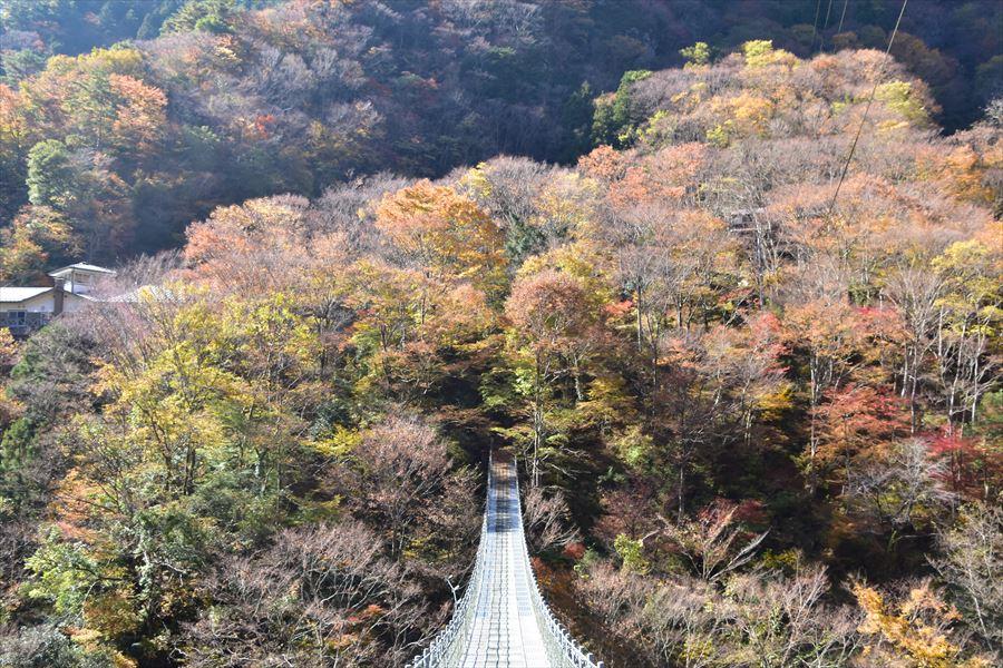 龍宮崖公園で祖谷川の上から紅葉を楽しむ
