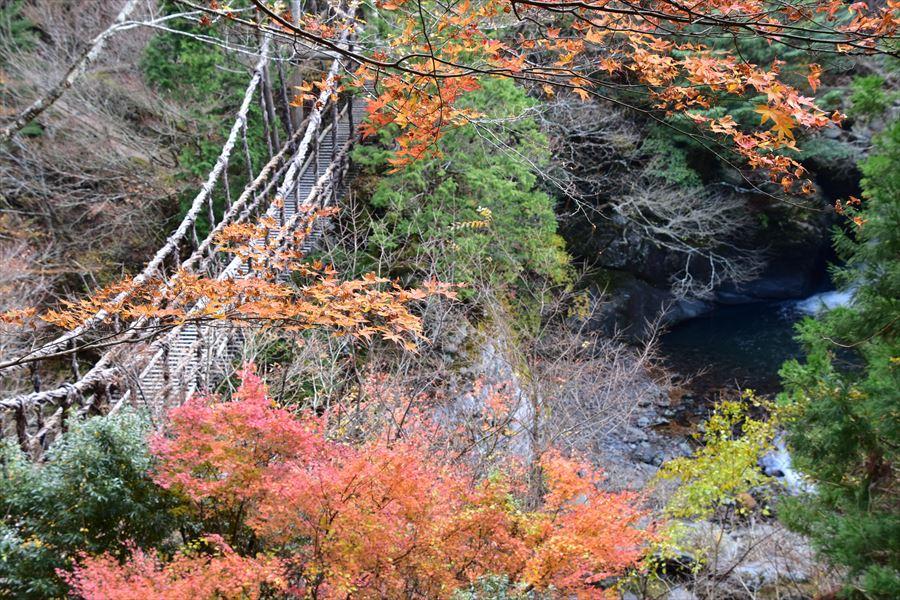 標高1000m前後の紅葉、かかしの里と奥祖谷二重かずら橋