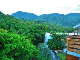 「西表島ジャングルホテル パイヌマヤ」はイリオモテヤマネコに会えるホテル!?