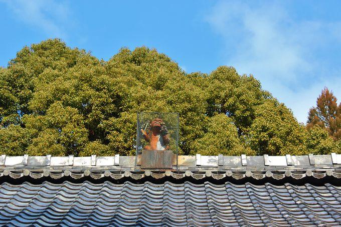 比叡山の麓・赤山禅院は屋根の上に