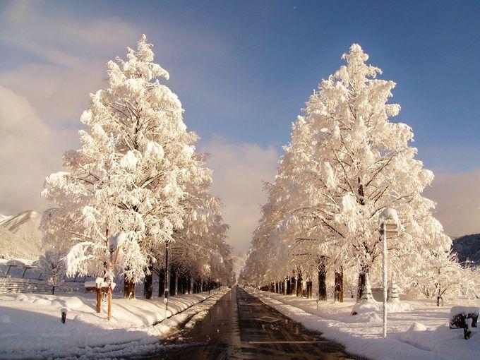『冬のソナタ』で一躍有名になったメタセコイア並木道