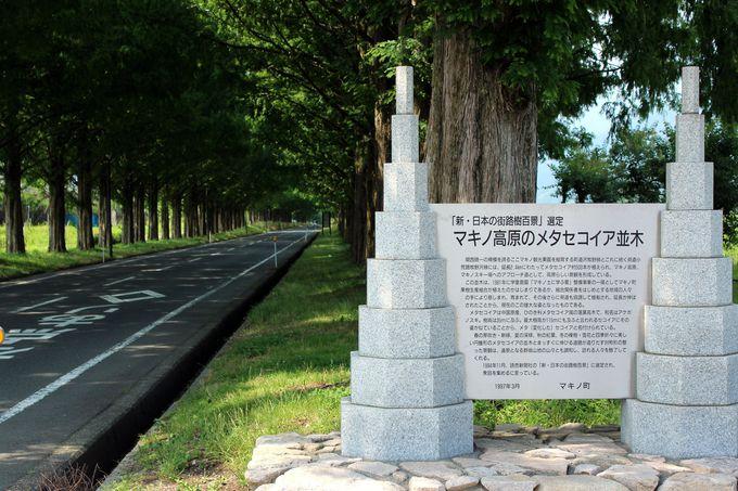 新・日本街路樹百景「マキノ高原のメタセコイア並木」