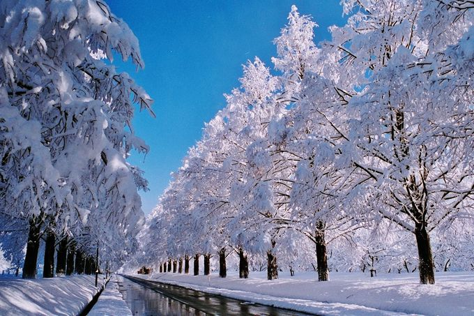 まるで映画のワンシーン!雪化粧をした白銀の並木道「メタセコイア並木道」(滋賀)