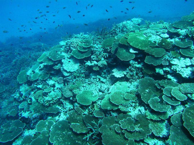池間島その他の探索ポイント