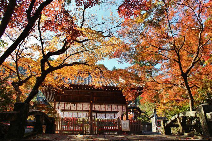「矢田の紅葉」とよばれる「鍬山神社」の紅葉
