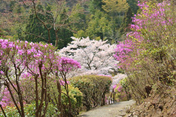 紅葉・桜だけじゃない、白龍園の魅力