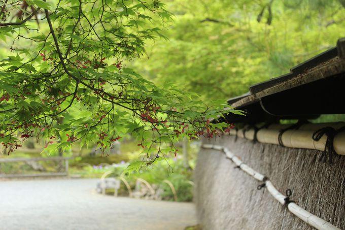 世界遺産・天龍寺の塔頭「宝厳院(ほうごんいん)」