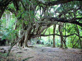 沖縄の原風景が残る神の島「浜比嘉島」でパワースポットをめぐろう