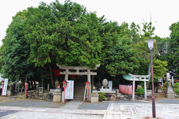 最古の稲荷神「折上稲荷神社」