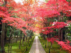 京都・嵐電沿線穴場紅葉めぐり〜鹿王院と北野天満宮