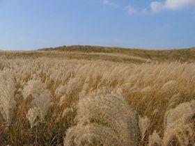 黄金色の草原へ・・・「曽爾高原」