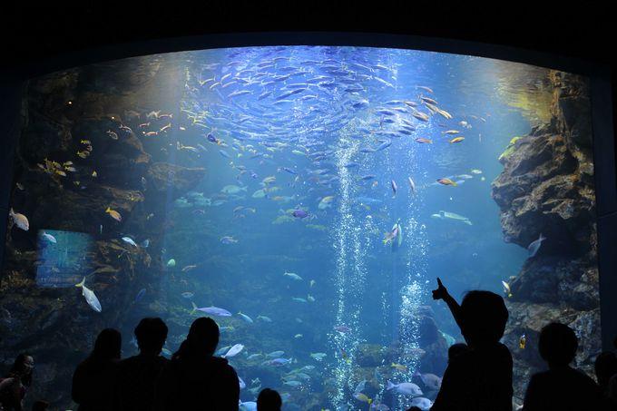 ゾーニングされた見やすい水族館