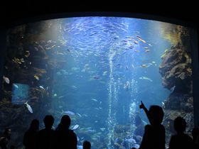 国内最大級の内陸型水族館!「京都水族館」