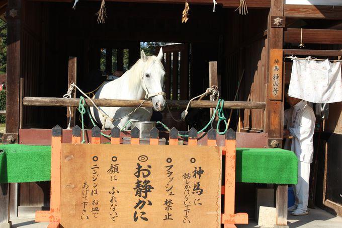 """""""神馬""""に会いにいこう!上賀茂神社"""