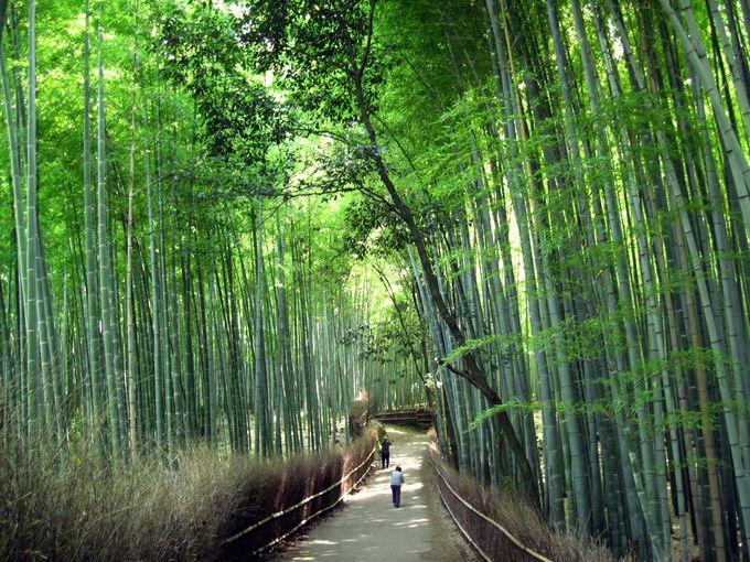 「竹」〜嵯峨野の竹林