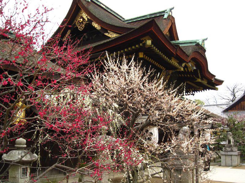 """""""歳寒三友"""" 冬の京都で「松竹梅」をめぐろう!"""