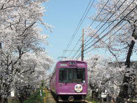 京都の桜まとめました! 地元通がオススメする20の名所