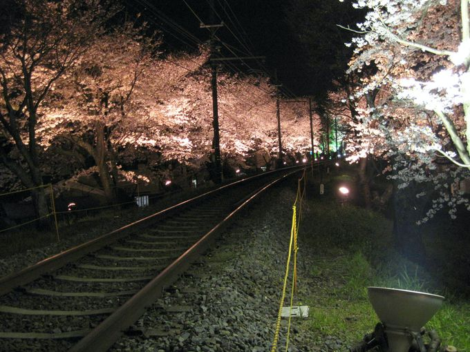 桜のトンネルはライトアップもあり!