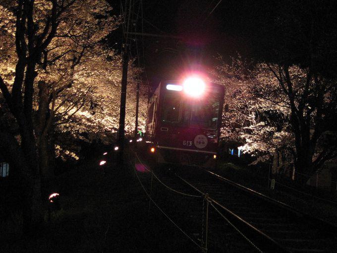 ライトアップも!嵐電に乗って桜のトンネルをくぐろう!「京都・嵐山」