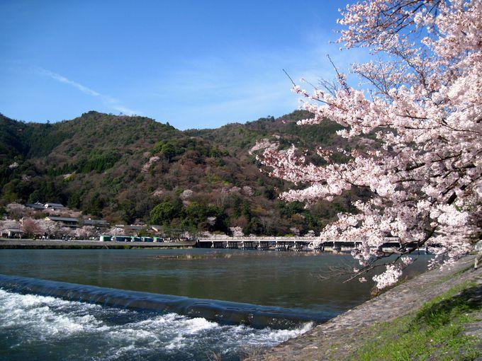 嵐山の桜も楽しもう!