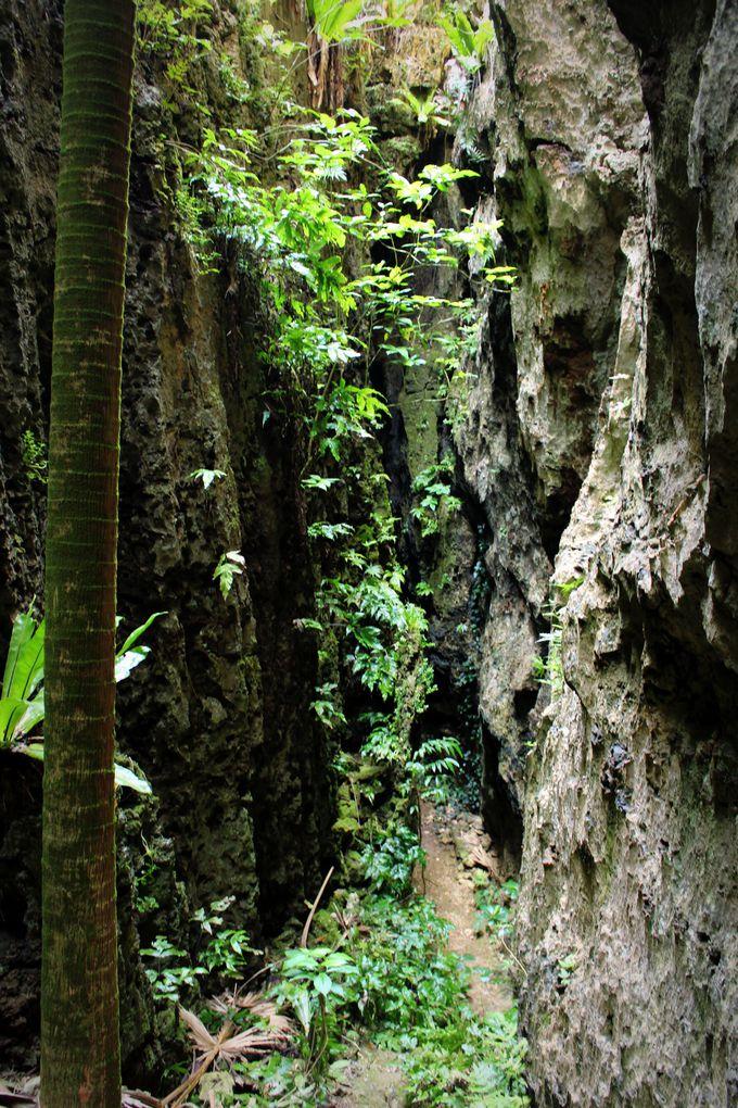 深く、続く「バリバリ岩」
