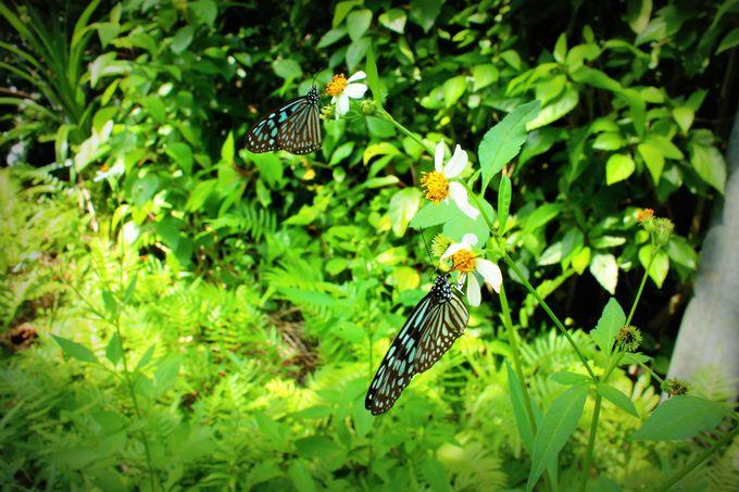 蝶の乱舞を見ながら「イダの浜」を目指しましょう