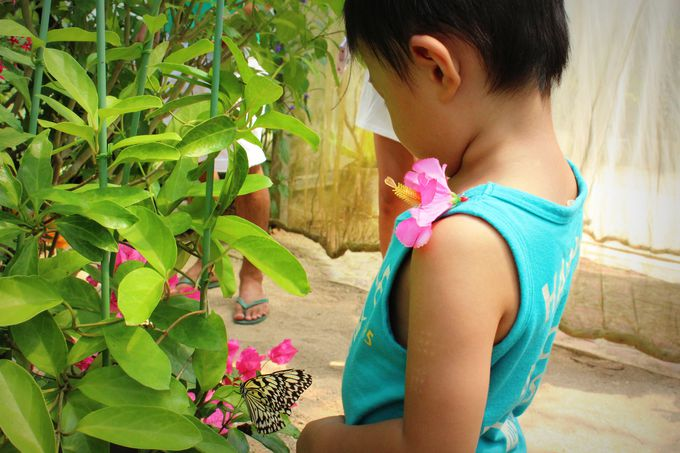 「蝶々園」では日本最大のチョウ、オオゴマダラが!