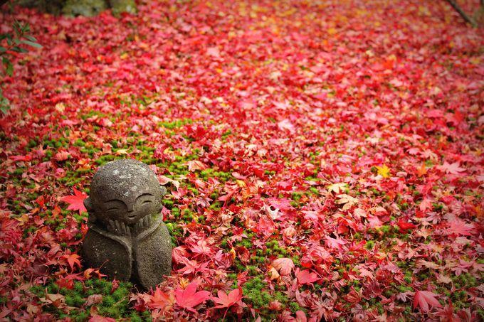 美しすぎる「圓光寺」の散りもみじ(京都)