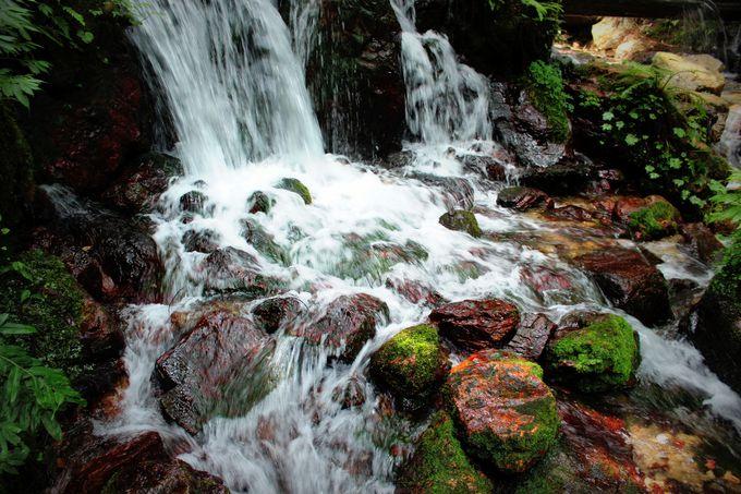 珍種の赤い藻も生息する環境