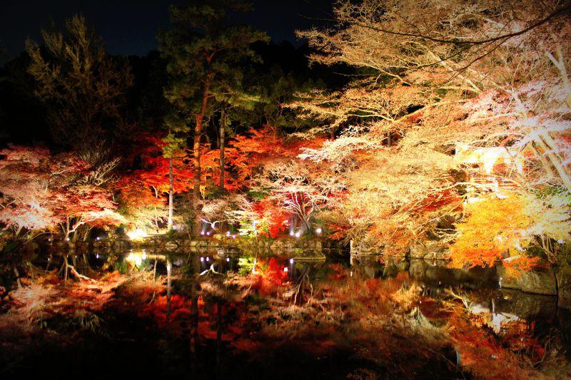 京都「醍醐寺」の紅葉ライトアップで幽玄なる世界へ