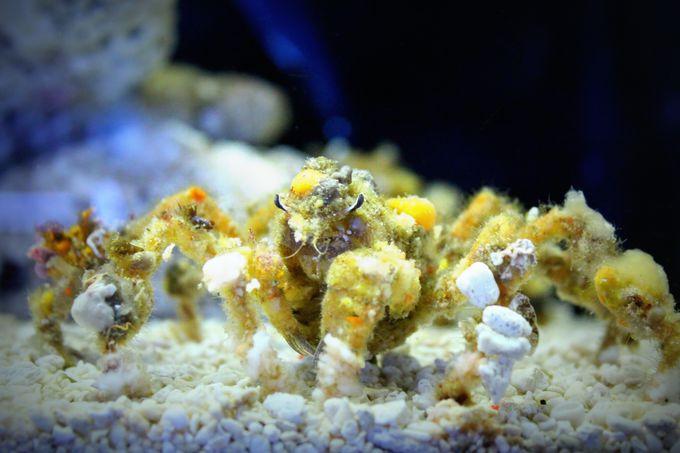 「すさみ海立エビとカニの水族館」