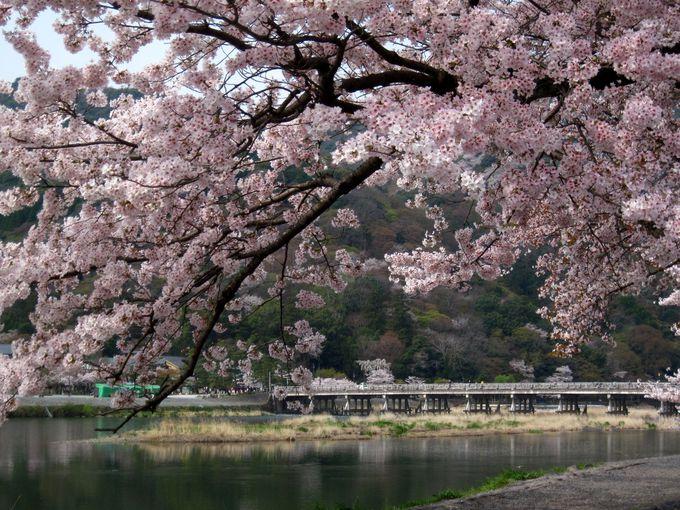 春は桜、秋は紅葉。京都の名だたる名所「嵐山」